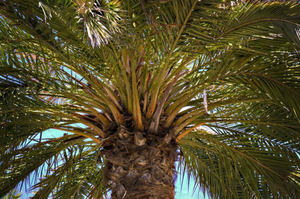 Fronds Photograph - Under The Palm by Ricky Barnard