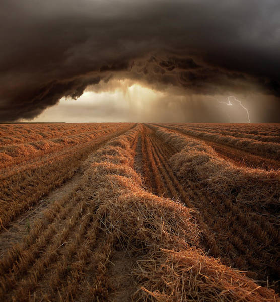 Harvest Wall Art - Photograph - Untitled by Franz Schumacher
