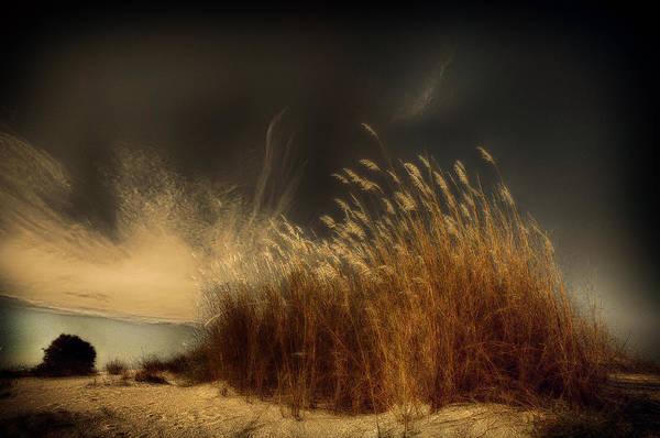 Straw Photograph - Untitled by Miki Meir Levi