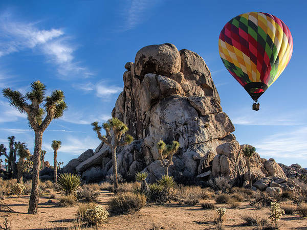 Yucca Palm Photograph - Up And Over At Joshua Tree by Dominic Piperata