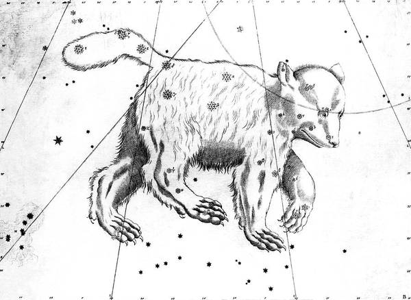 First Star Photograph - Ursa Major Constellation by Royal Astronomical Society/science Photo Library