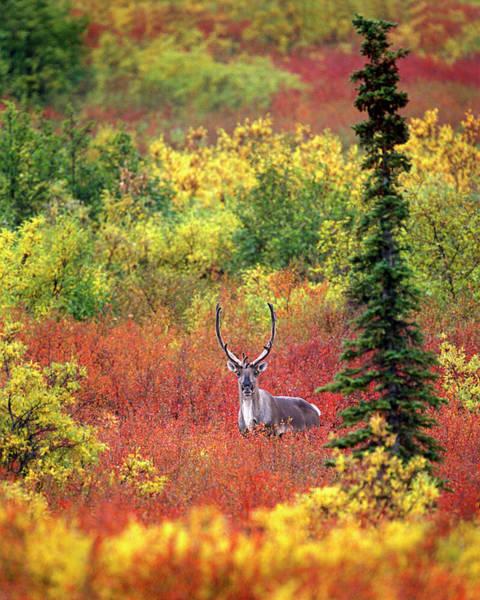 Wall Art - Photograph - Usa, Alaska, Denali National Park by Jaynes Gallery