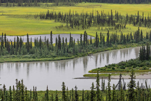 Boreal Forest Photograph - Usa, Alaska, Nenana River Valley by Jaynes Gallery