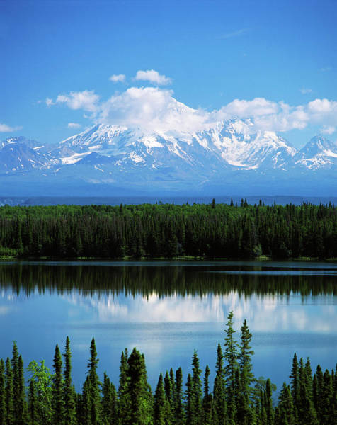 Mt. Adams Photograph - Usa, Alaska, Willow Lake And Mt by Adam Jones