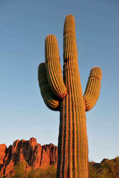 Wall Art - Photograph - Usa, Arizona, Lost Dutchman State Park by Kevin Oke