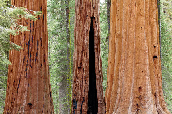 Don Photograph - Usa, California, Sequoia National Park by Jaynes Gallery