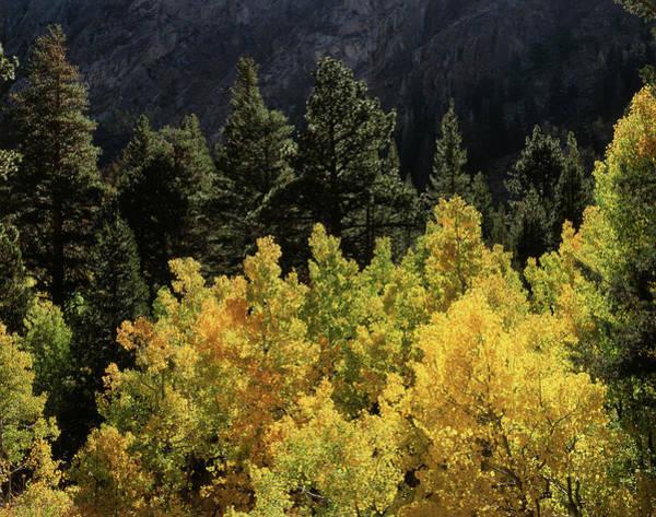 Backcountry Photograph - Usa, California, Sierra Nevada by Christopher Talbot Frank