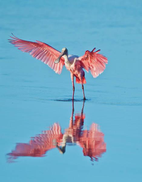 Ding Photograph - Usa, Florida, Sanibel Island, Ding by Bernard Friel