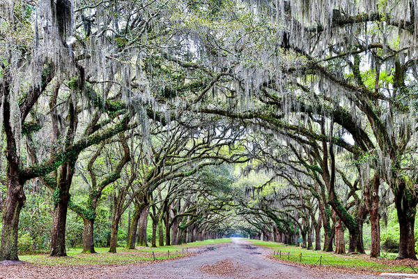 Wall Art - Photograph - Usa, Georgia, Savannah by Hollice Looney