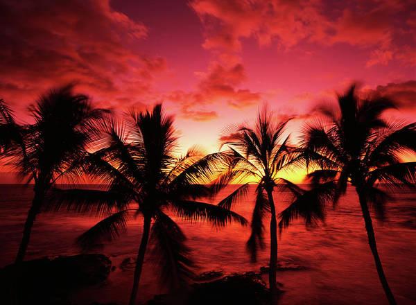 Stuart Photograph - Usa, Hawaii Islands, Kona, View Of Palm by Stuart Westmorland