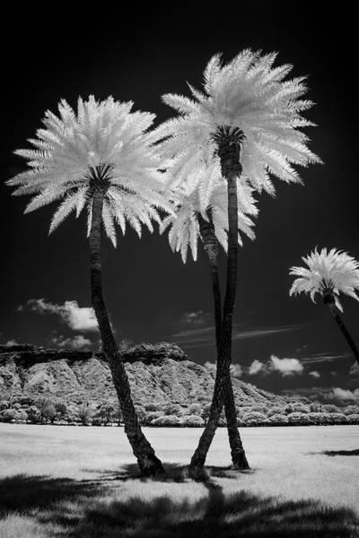 Parks And Recreation Photograph - Usa, Hawaii, Oahu, Honolulu, Kapiolani by Peter Hawkins