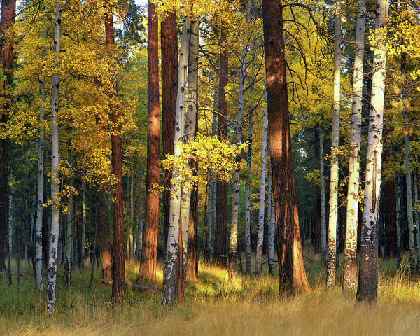 Pine Grove Photograph - Usa, Oregon, Deschutes National Forest by Jaynes Gallery