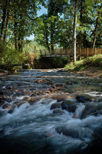 Wayside Photograph - Usa, Oregon, Scio, Crabtree Creek by Rick A Brown