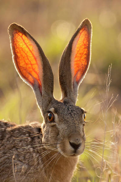 Animal Behavior Photograph - Usa, Texas, Maverick County by Jaynes Gallery