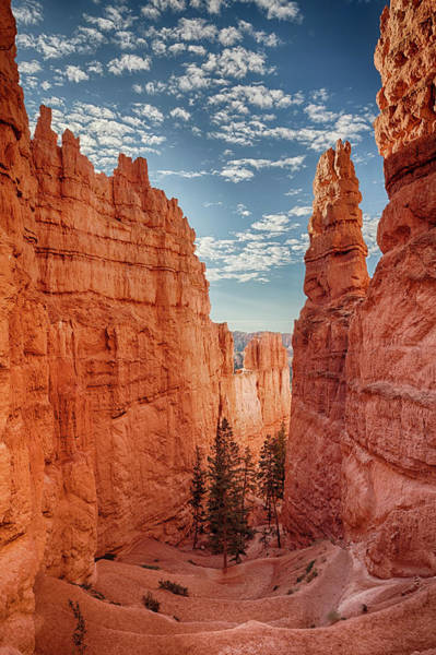 Geology Photograph - Usa, Utah, Bryce Canyon National Park by Bryan Mullennix