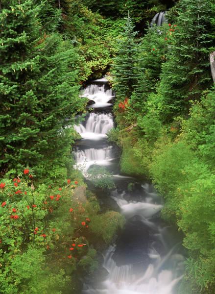 Mt. Adams Photograph - Usa, Washington State, Gifort Pinchot by Stuart Westmorland