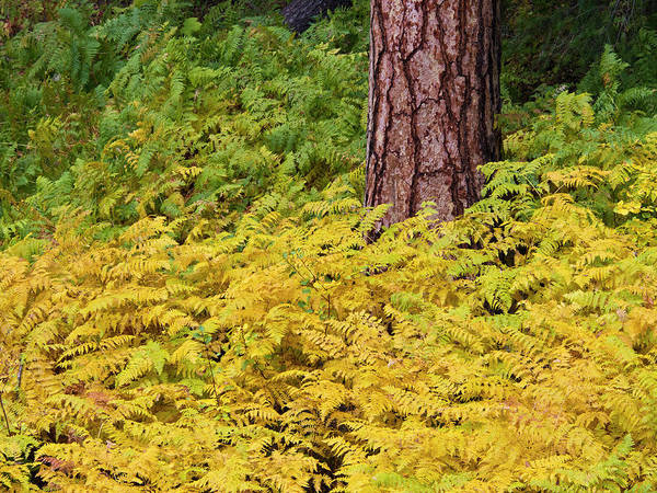 Away From It All Wall Art - Photograph - Usa, Washington State, North Cascades by Terry Eggers