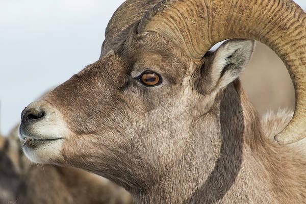 Wall Art - Photograph - Usa, Wyoming, National Elk Refuge by Elizabeth Boehm