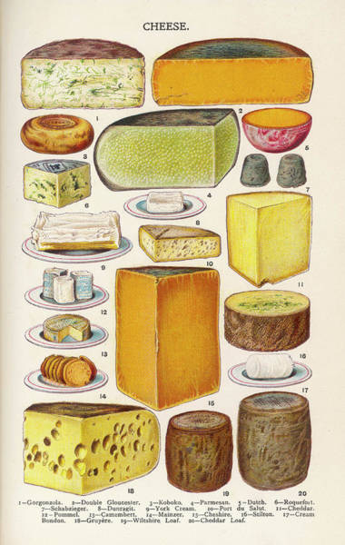 Cheese Drawing - Various Cheeses In Household Management by Mary Evans Picture Library