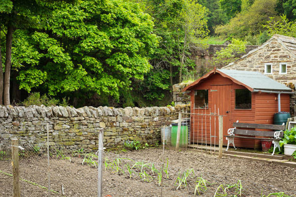 Allotment Wall Art - Photograph - Vegetable Garden by Tom Gowanlock