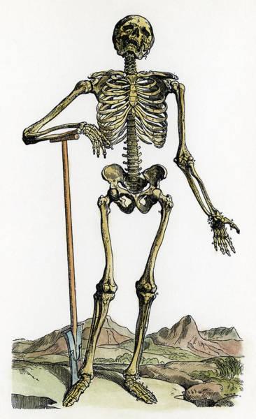 De Humani Corporis Fabrica Photograph - Vesalius: Skeleton, 1543 by Granger