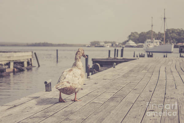 Photograph - Vintage Bird Walking Along A Beach Promenade by Jorgo Photography - Wall Art Gallery