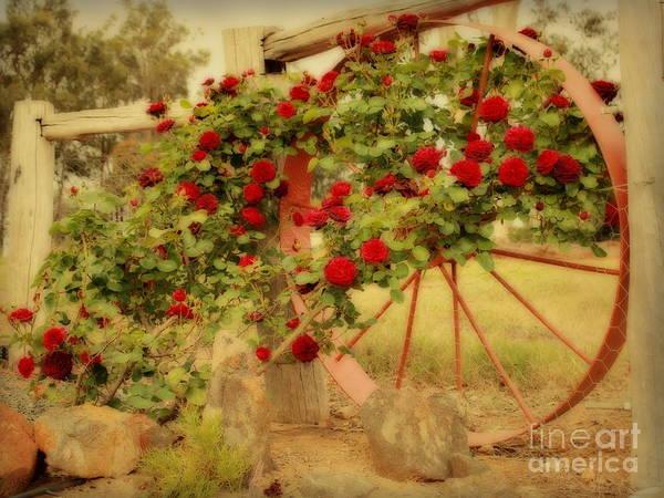 Photograph - Vintage Roses by Elaine Teague