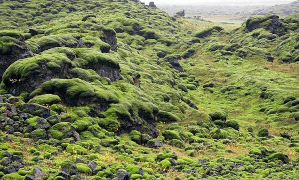 Inactive Photograph - Volcanic Lava Field by Steve Allen/science Photo Library