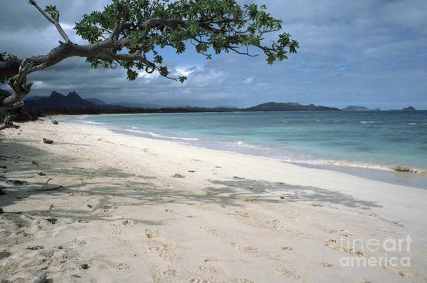 Photograph - Waimanalo State Recreation Area by Thomas R Fletcher