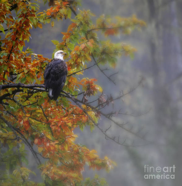 Wall Art - Photograph - Waiting For The Fog To Lift by Scarlett Images Photography