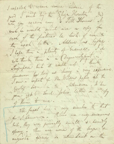 Wall Art - Photograph - Wallace Letter During Malay Trip by Natural History Museum, London/science Photo Library
