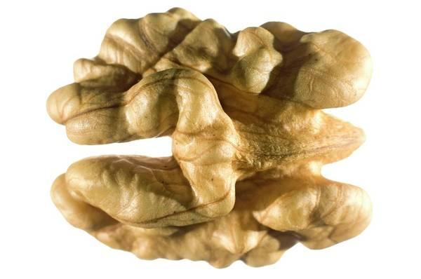 Walnut Photograph - Walnut by Daniel Sambraus/science Photo Library