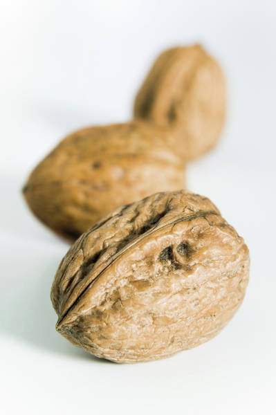 Walnut Photograph - Walnuts by Gustoimages/science Photo Library
