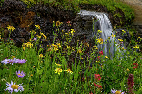 Wall Art - Photograph - Waterfall Behind Wildflowers by Tom Norring