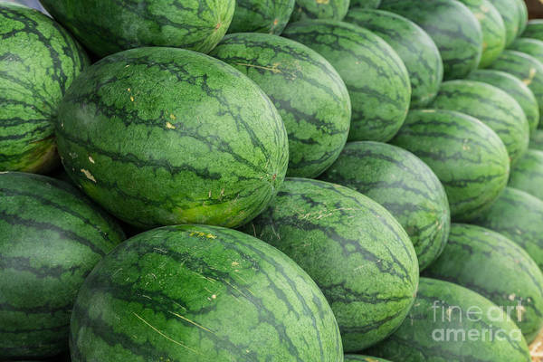 Watermellon Wall Art - Photograph - Watermelon  by Tosporn Preede
