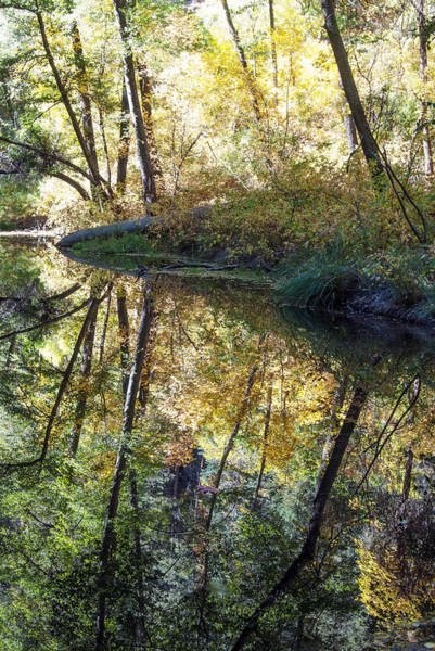 Photograph - West Fork Reflections by Tam Ryan