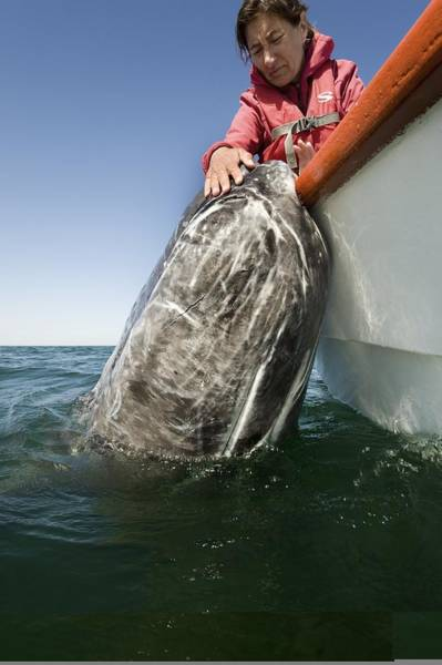 Wall Art - Photograph - Whale Watching, Mexico by Science Photo Library
