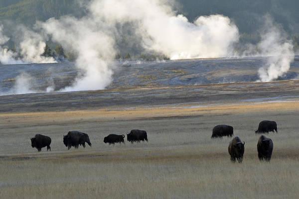 Photograph - Where The Buffalo Roam by Bruce Gourley