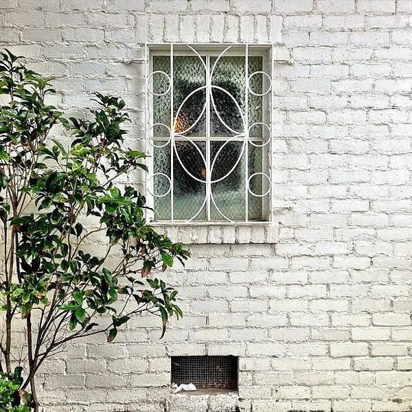 Wall Art - Photograph - White Brick by Julie Gebhardt