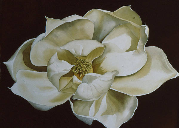Painting - White Magnolia  by Alfred Ng