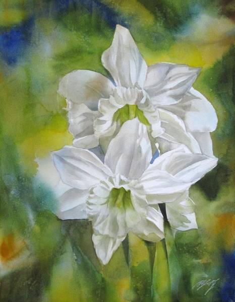 Painting - White Narcissus  by Alfred Ng