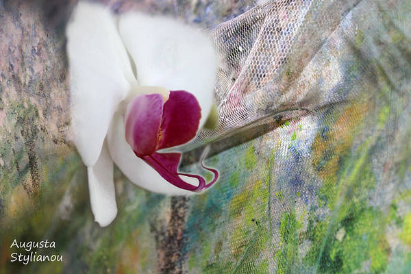 Pink And White Digital Art - White Orchid Abstract by Augusta Stylianou