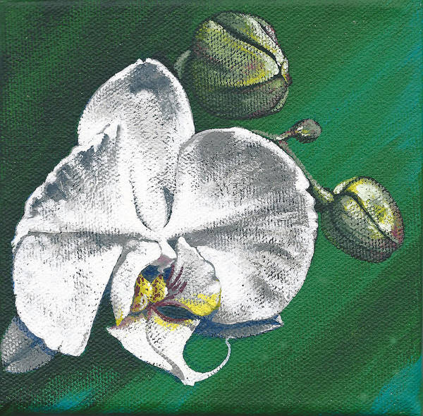 Painting - White Orchids II by Joan Garcia
