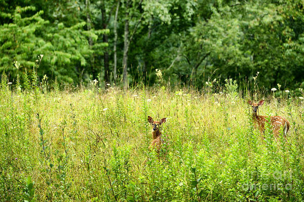 Wall Art - Photograph - Whitetail Fawns by Thomas R Fletcher