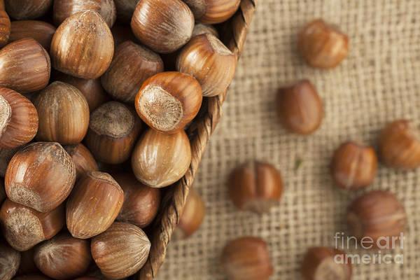 Unbroken Wall Art - Photograph - Whole Hazelnuts by Charlotte Lake