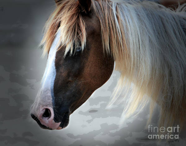 Photograph - Wild Assateague Island Pony by Gerlinde Keating - Galleria GK Keating Associates Inc
