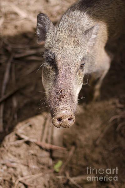 Photograph - Wild Boar by Jorgo Photography - Wall Art Gallery