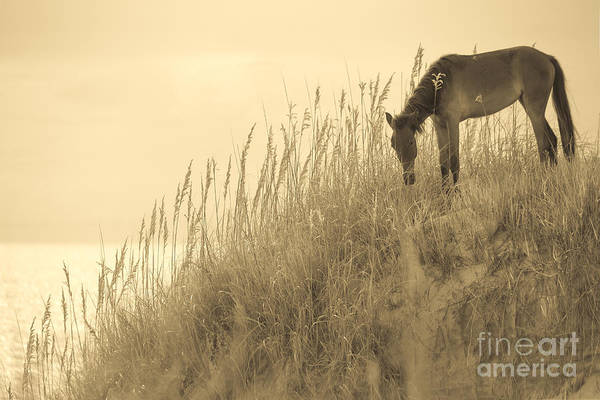 Outer Banks Wall Art - Photograph - Wild Horse On The Outer Banks by Diane Diederich