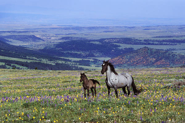 Mare And Foal Photograph - Wild Horse by Thomas And Pat Leeson