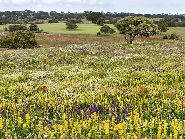 Iberian Peninsula Wall Art - Photograph - Wildflower Meadow, Mertola, Parque by Martin Zwick